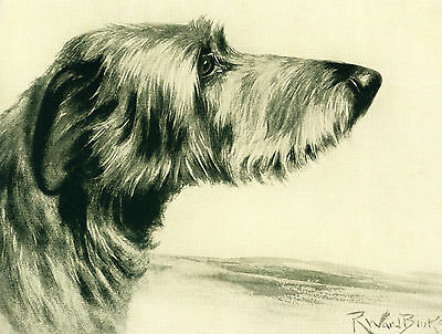 Dog Print 1934 Scottish Deerhound Dog by Ward Binks VINTAGE