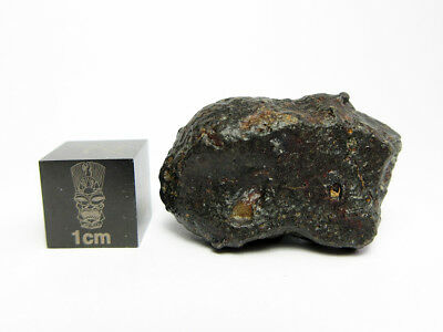 NWA 869  Meteorite 8.63g Beautifully Shaped Chondrite