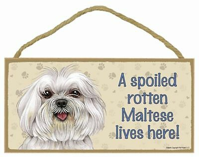 """Spoiled Rotten Maltese Lives Here  Sign Plaque Dog 10"""" x 5""""  puppy cut"""