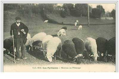 66.les Pyrenees.moutons Au Paturage