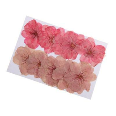 10pcs Natural Pressed Dried Sakura Flower Cherry Blossom for DIY Arts Crafts