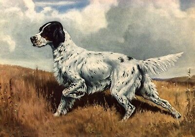 English Setter hunting DOG ART PRINT VINTAGE Megargee Edwin 1942