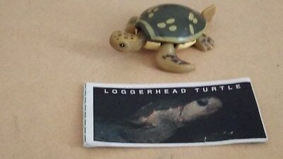 YOWIE Series 1. LOGGERHEAD TURTLE with info paper + Toy Collectible