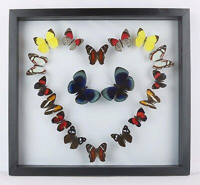 "Real butterflies mounted in 10.5"" x 11.5"" wood frame.  BEAUTIFUL."