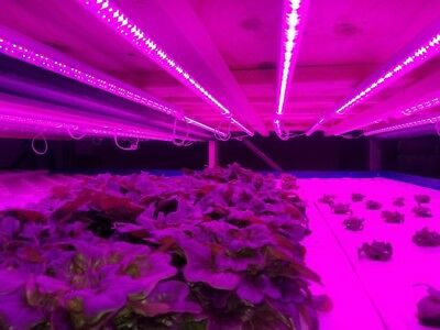3 Hydroponic LED grow lights 4 foot T8 tubes. Great for lettuce and microgreens.