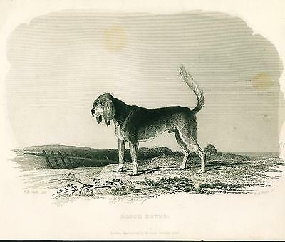 Dog Print 1846 Bloodhound Dog ANTIQUE