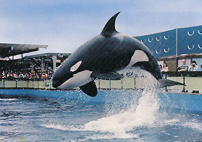 """HAIDA"" the Killer Whale, Sealand of the Pacific, Victoria, B.C., Canada, 60-80s"