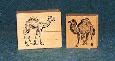 2 Camel Rubber Stamps (2.25in and 1.5in) ODAT FREE SHIP USA!