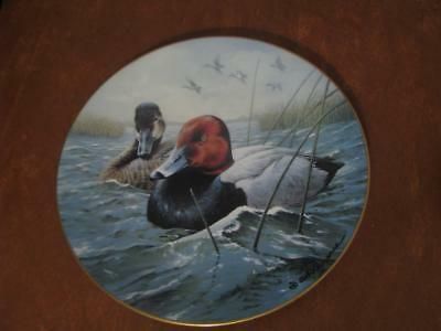 Ducks Collector's Plate by Rod Lawrence North American Ducks
