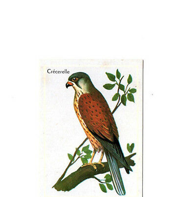 "Image Vignette Ancienne Cartonne "" Bon Point "" Oiseau La Crecerelle"