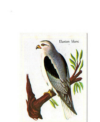 "Image Vignette Ancienne Cartonne "" Bon Point "" Oiseau L'elanion Blanc"