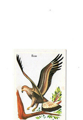 "Image Vignette Ancienne Cartonne "" Bon Point "" Oiseau La Buse"