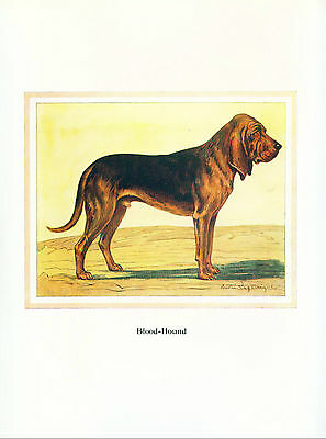 Dog Print 1934 Bloodhound Dog Limited Edition Print from France RARE