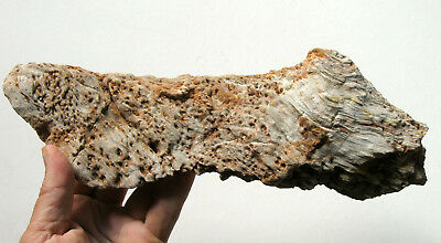 Petrified wood from Aachen (Germany)