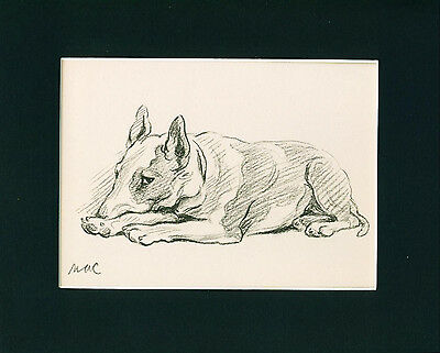Dog Print 1940 Bull Terrier is thinking by Lucy Dawson VINTAGE