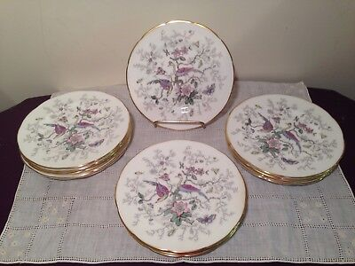 14 Coalport Cairo Multi-Color White Bread Plates Peacocks Butterflies Flora