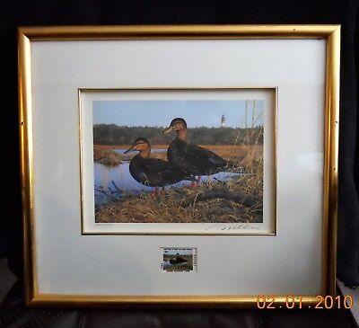 Virginia State Duck Stamp and Print 1993 - Framed - Black Ducks by Bruce Miller