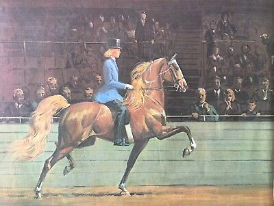 5 GAITED SHOW HORSE IN RING Art Print BY SAM SAVITT GORGEOUS 1966
