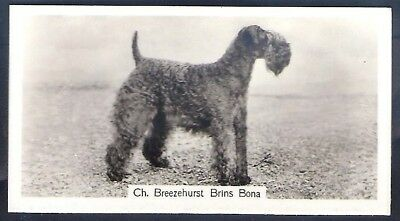 Sinclair-Champion Dogs (1St Series F54)-#32- Kerry Blue Terrier