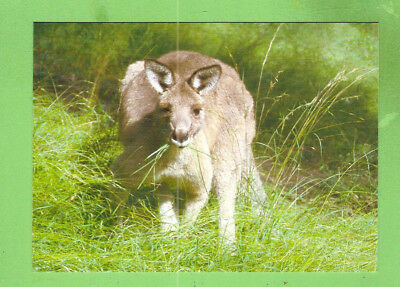 #b.  Postcard - Eastern Grey Kangaroo