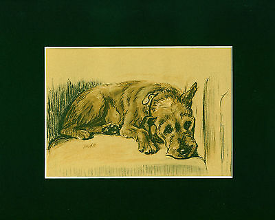 VINTAGE Dog Print 1937 Irish Terrier by Lucy Dawson