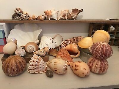 Huge Sea Shell Collection large shells. Beach decor, clam shell sea urchin conch