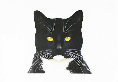 The Black and White Cat Large Cotton Tea Towel by Half a Donkey