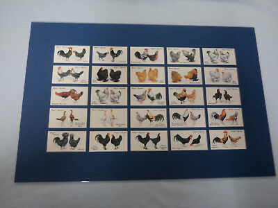 #Bw8.  Matted Authorised Reproduction Cigarette Cards (25)- Poulry