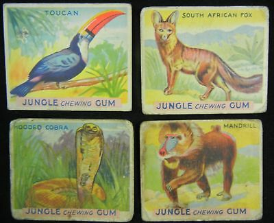 Lot of (4) 1933 JUNGLE CHEWING GUM ANIMAL TRADE CARDS  3 13 23 41