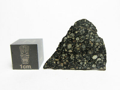 NEW! NWA 11672 L3 1.84g Chondrite Mirror Polished Slice