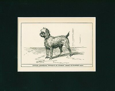Dog Art Print 1900 Brussels Griffon Dog ANTIQUE