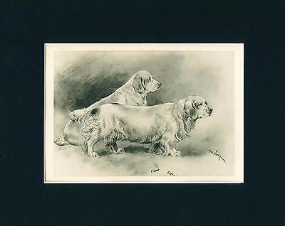 Dog Print 1897 Clumber Spaniel Dogs by Arthur Wardle ANTIQUE