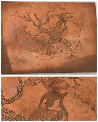 Hand engraved Copper plate beautifully done bird