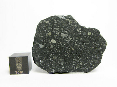 NWA 11241 CV3 4.96g Slice of a New & Very Fresh Carbonaceous CV