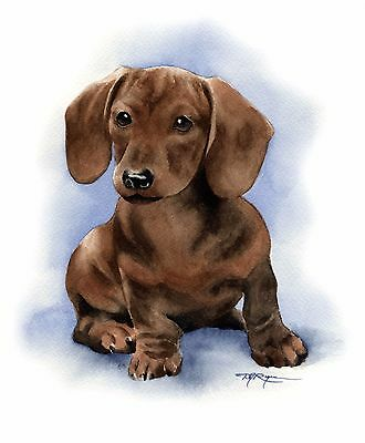 DACHSHUND PUPPY DOG watercolor 8 x 10 ART print signed by artist DJR