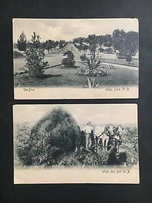Postcard Lot Of 2 From Perth W.a Kings Park & White Ant Hill By Fox & Gibson