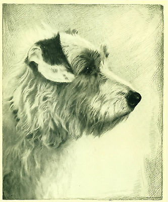 Dog Art Print 1935 Sealyham Terrier VINTAGE