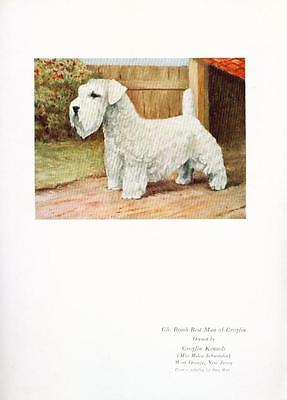 Dog Print 1930s Ch Sealyham Terrier Dog VINTAGE