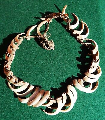 New Guinea Boar's Tusk Necklace