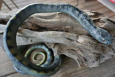 5' Realistic Rat Snake Replica - Rubber
