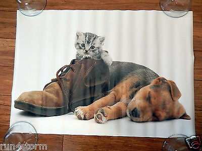 """Kitten in a Shoe & Sleepy Puppy poster by Scandecor 16 ¼"""" x 23 ½"""" Poster"""
