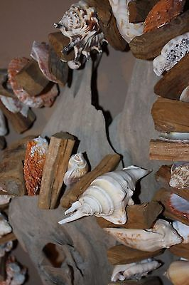 Oceanside Restaurant Decor, Hanging Seashell Driftwood Garland, Beach Theme