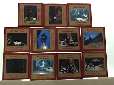 1950s Kodachrome Redwood Forest - Lot of 11 Slides
