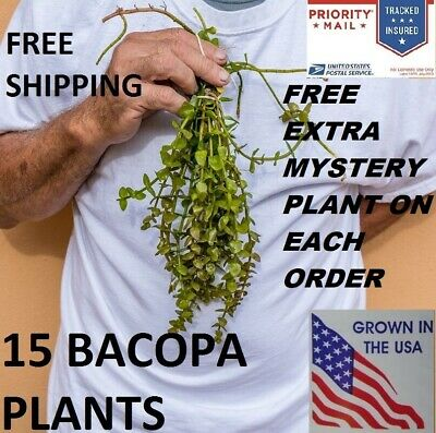 15 Bacopa plants live aquarium plants aquascaping planted tank beginner easy