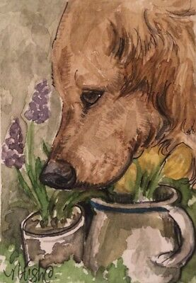 ACEO Golden retriever Dog And Spring Bulbs. A Watercolor Original Art By NFISH