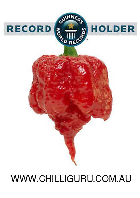 *sale - Limited Time* 30 X Carolina Reaper Chilli Seeds - Worlds Hottest Chilli!