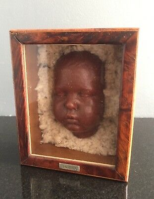 Antique wax moulage - baby in burl box - death mask, curiosity cabinet, oddity