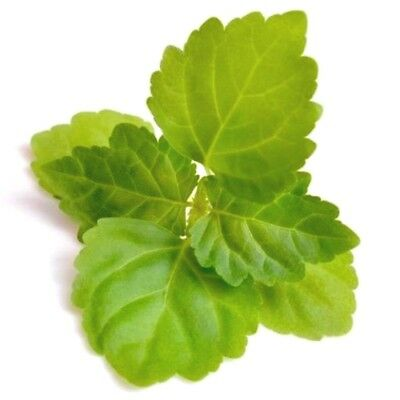 10ml Patchouli Essential Oil - 100% Pure & Natural Aromatherapy Grade Oils