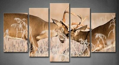 Framed Wall Art White Tailed Deer Bucks Pictures Canvas Print Animal Picture