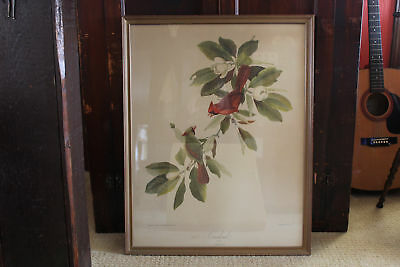 Vintage Large Cardinals Print, Framed Bird Lithograph #2 by Roger Tory Peterson
